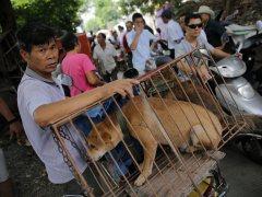 Perros en el mercado