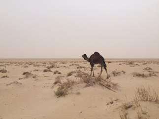 En medio del desierto