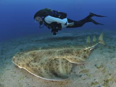 'Angelote', el tiburón que quiere ser lince