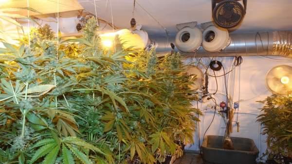 Detenido un pamplonés con 31 kilos de marihuana.