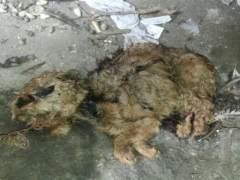 Hallazgo de un perro muerto