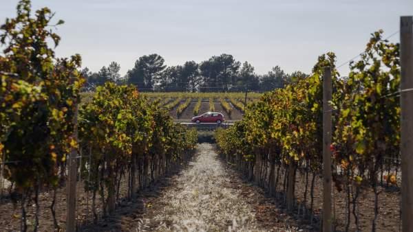 La Carretera del Vino