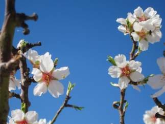 Primaveración