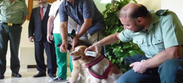 Ajevet entrega al Seprona nuevos lectores de identificación animal