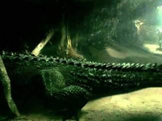 El territorio de la bestia (Rogue, 2007)