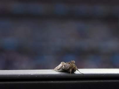 Polillas en la Eurocopa