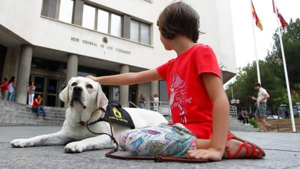 Perros de asistencia judicial