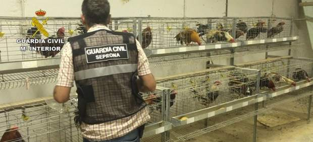 La Guardia Civil con los gallos