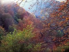 El cambio climático reducirá el crecimiento de los bosques