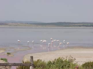 Reserva Natural de las Lagunas de Campillos