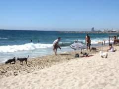 Más de 10.400 canes han pasado por la primera playa para perros de Barcelona entre julio y agosto