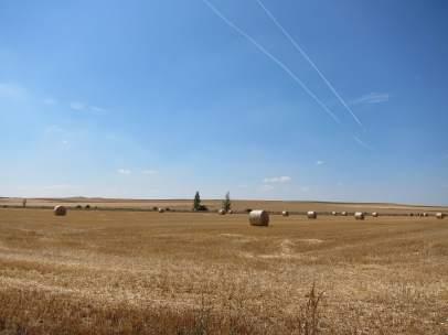 Campos De Cultivo, Cereal, Cosecha, Verano, Turismo Rural