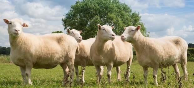 Los clones de Dolly