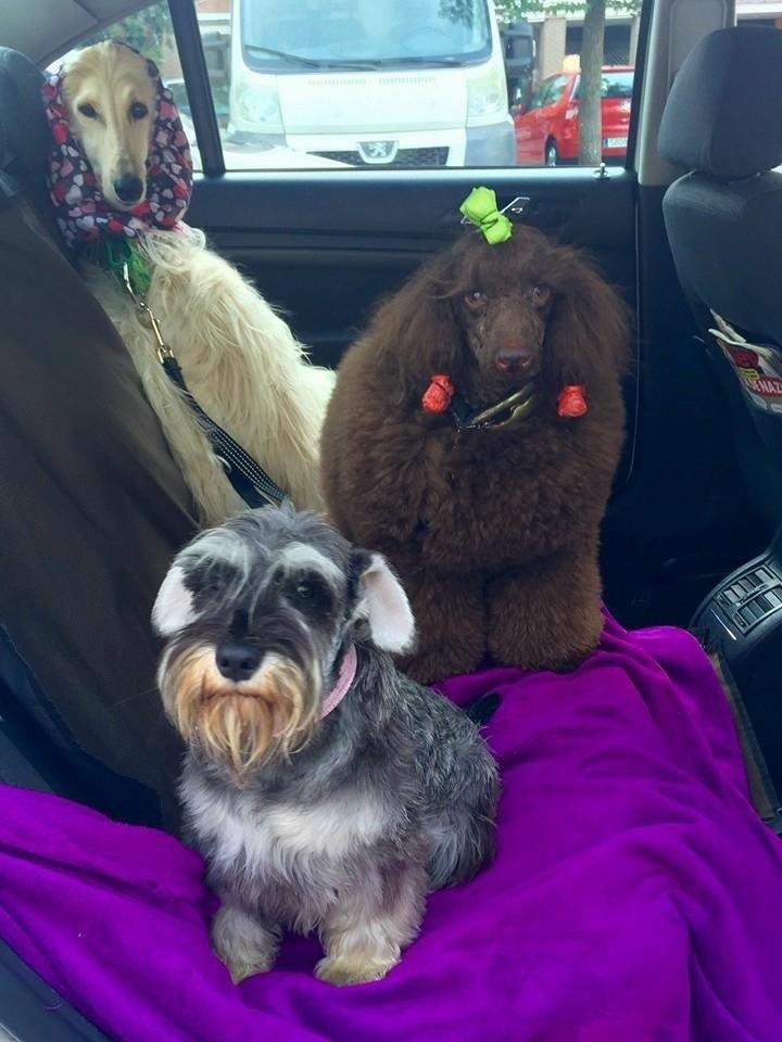Servicio de taxis para perros