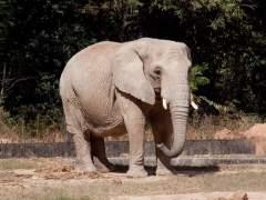 Un elefante mata a una niña por accidente en Marruecos