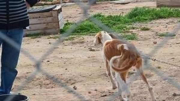 Perros rescatados en Entrena