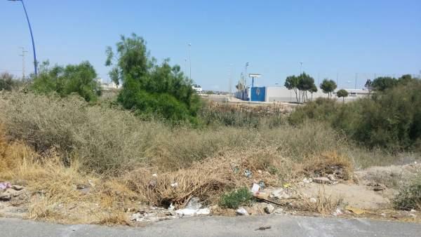 Suciedad y rastrojos acumulados en Almería