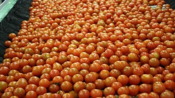 Fotos De Archivo Lavado De Tomates De Citrosol