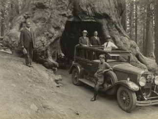 Audley D. Stewart (American, 1882–1972). George Eastman and companions riding through Wawona Tree in Yosemite National Park, Pacific Coast Trip, 1930