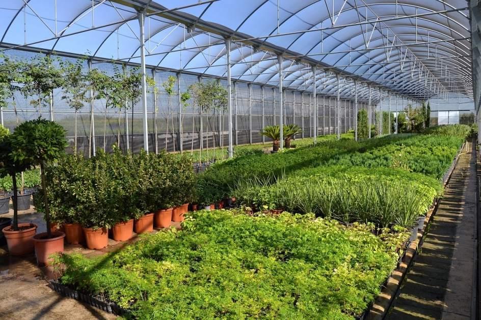 El vivero de la diputaci n de badajoz suministra plantas for Viveros en badajoz