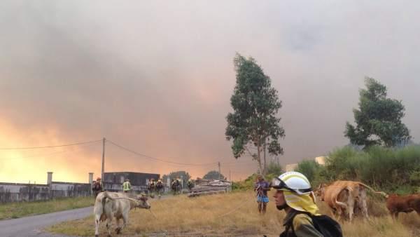 Incendio de Cotobade (Pontevedra)