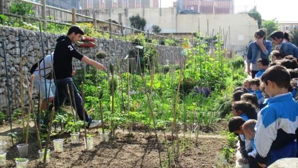 Huertos sostenibles