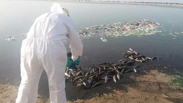 Recogida de peces muertos en Rambla Morales
