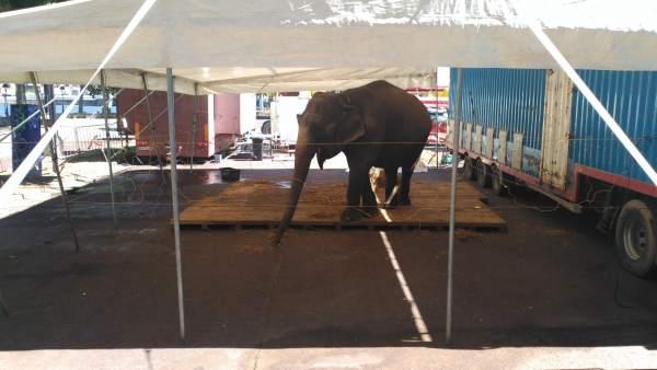 Elefante en Culleredo (A Coruña)
