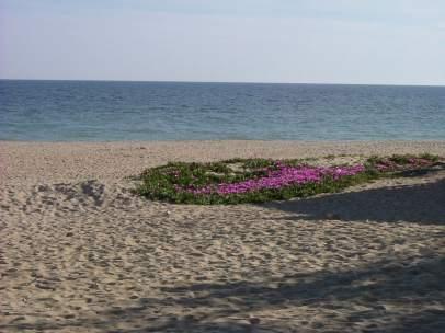 Playa de La Antilla (Lepe)