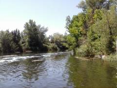Alcalá recoge muestras tras hallar peces muertos en el río Henares