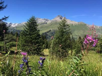 Imagen del parque natural Alp Flix (Suiza)
