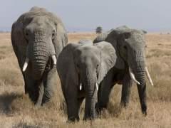 Muere aplastado por un elefante con el que quería hacerse un 'selfie'