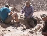 Hallan un nuevo yacimiento paleontológico en Morella