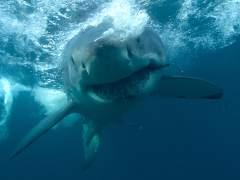 La pesca de más de 100 millones de tiburones al año deja secuelas graves en el ecosistema marino