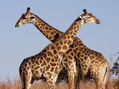 Cinco reservas naturales para un safari en Sudáfrica