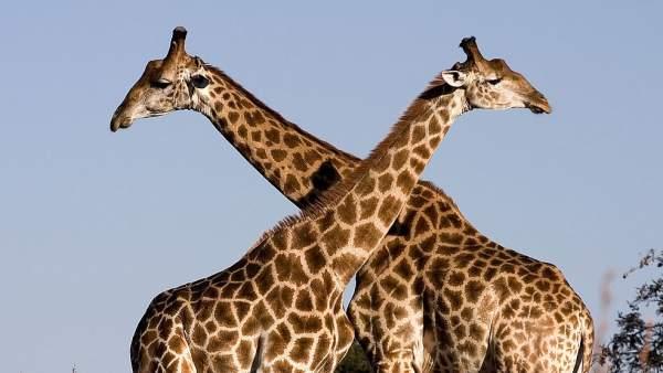 De safari por Sudáfrica: cinco reservas naturales para conocer de cerca la vida salvaje