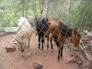 Tres caballos y tres perros estaban desnutridos en una finca de Cervelló, Barcelona.