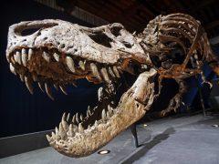 El tiranosaurio tenía una cara sin labios y con escamas, similar al cocodrilo