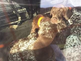 Perros al sol