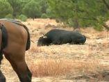 El toro 'Pelado', muerto en el campo