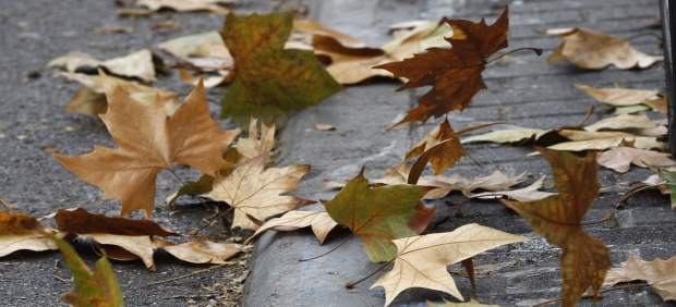 Recursos de viento, temporal, hojas, otoño