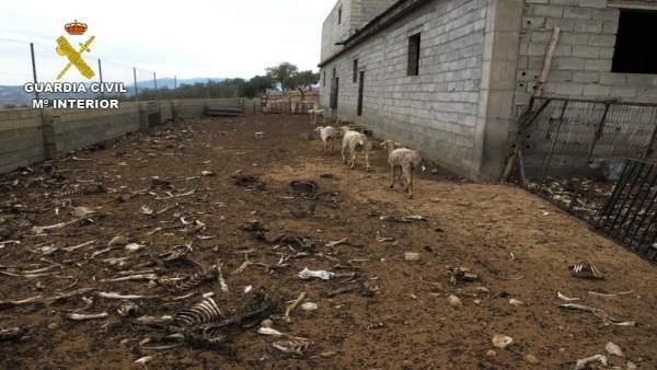 Cinco ovejas sobrevivieron en la finca de Zújar
