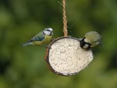 Las aves insectívoras son capaces de detectar a sus presas por el olfato