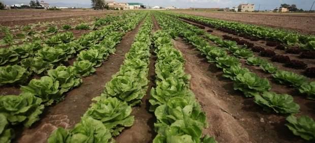 El Consell planteja una Llei de l'Horta que impedix reclassificacions i aposta per la cessió de terres per al seu cultiu