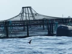 4,1 millones en ayudas a la actividad pesquera y acuícola
