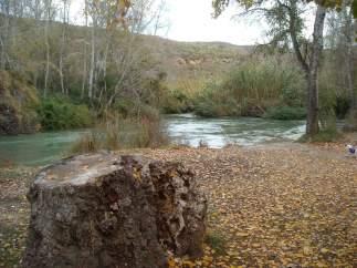 Ribera en la reserva de Cañaverosa