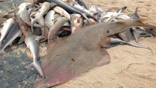Exceso de pesca