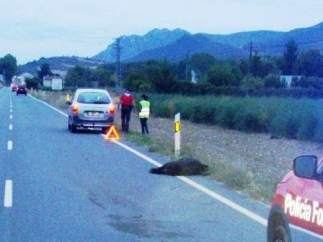 Accidente por atropello a jabalí en Murieta.