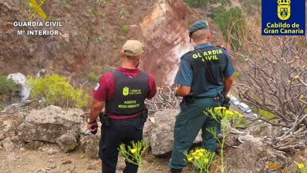 El Cabildo de Gran Canaria y Guardia Civil detectan a 11 cazadores furtivos