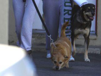 Senela Gómez y sus perros